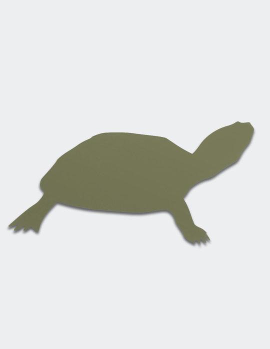 tortue-marine-vert-jonc